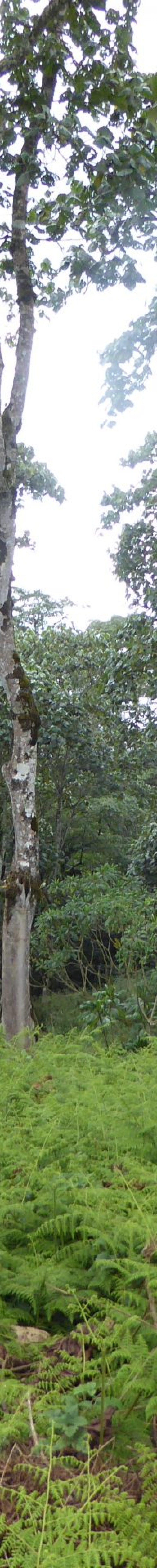 Kinale Forest Aberdares