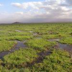 swamps of Amboseli National Park