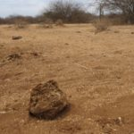 Months-old dry elephant dung near a waterless lake outside Amboseli National Park