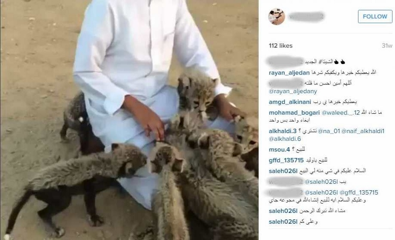 Photo 2015-02-24: Caption: Screenshot of Instagram post offering 8 cheetah cubs for sale in Saudi Arabia. Credit: Screenshot captured by Cheetah Conservation Fund.