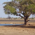 The waterhole at Satao Camp with a webcam to 'catch' animals at the waterhole