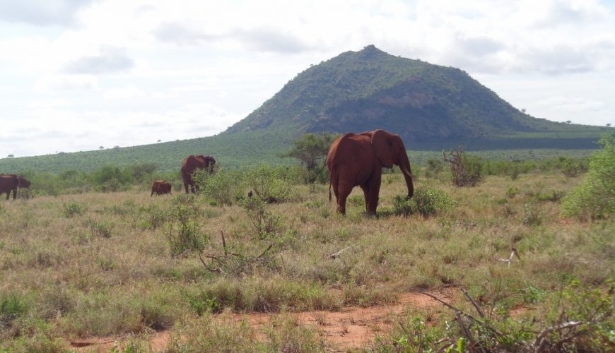 The iconic red elephants of Tsavo
