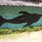 Thousand bottle Bottle-nose dolphin by Andrew McNaughton at EcoWorld, Watamu