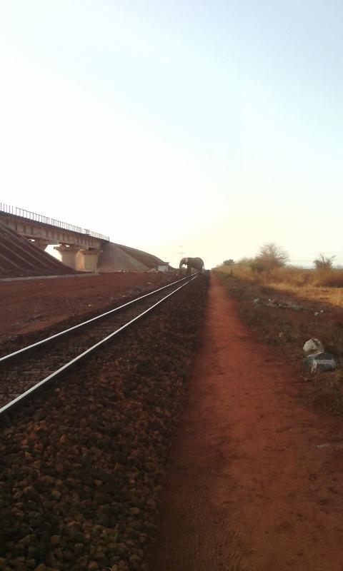 An elephant crossing the old Meter gauge railway