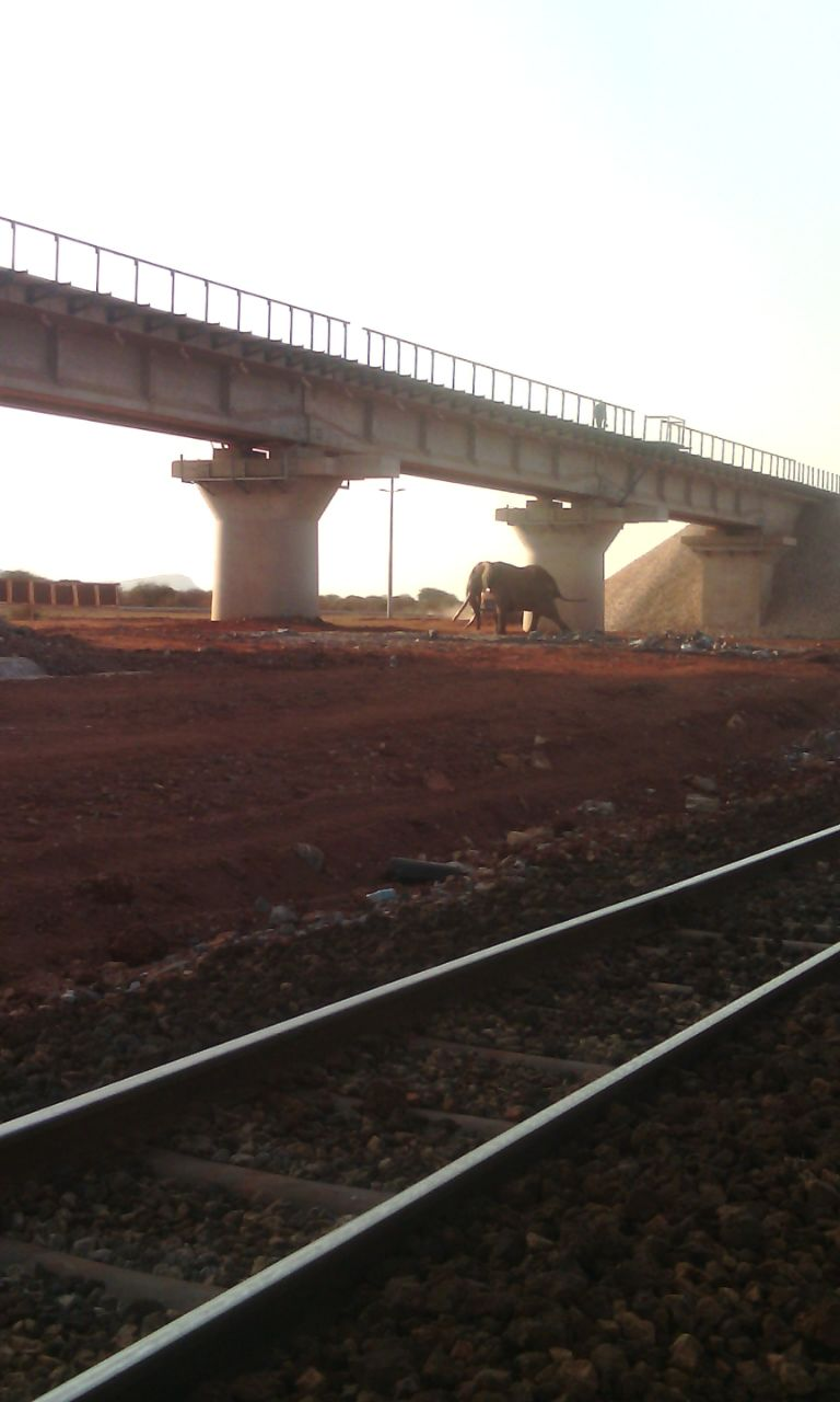 Elephant crossing under the bridge of the new SGR crossing point.