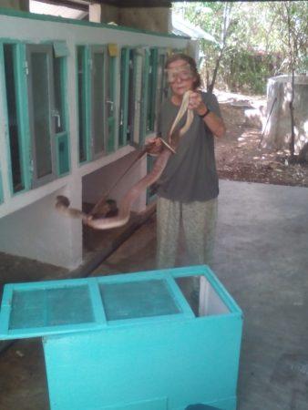 Sanda Ashe handling cobra. Picture courtesy