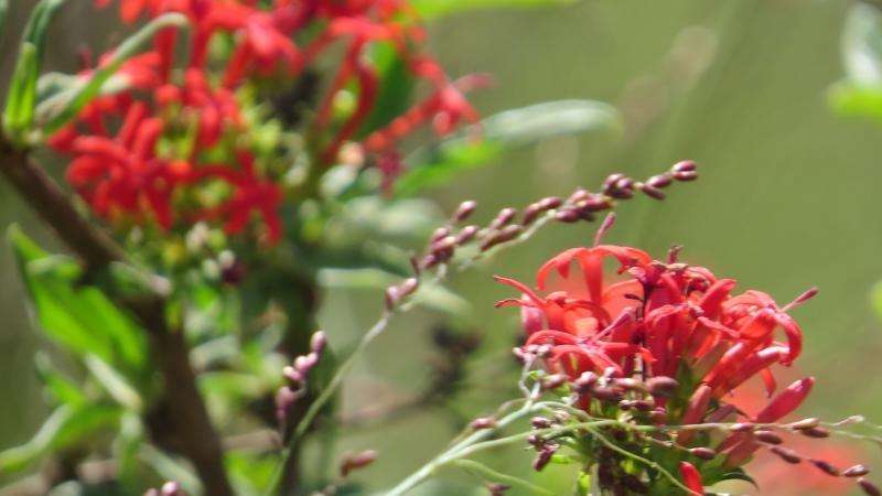 Wild flowers in Nairobi National Park