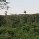 Indigenous forest surounding Serena Mountain Lodge