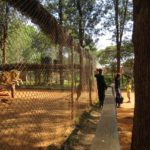 Lions rescued outside Nairobi National Park as cubs safely in Nairobi Animal Orphanage