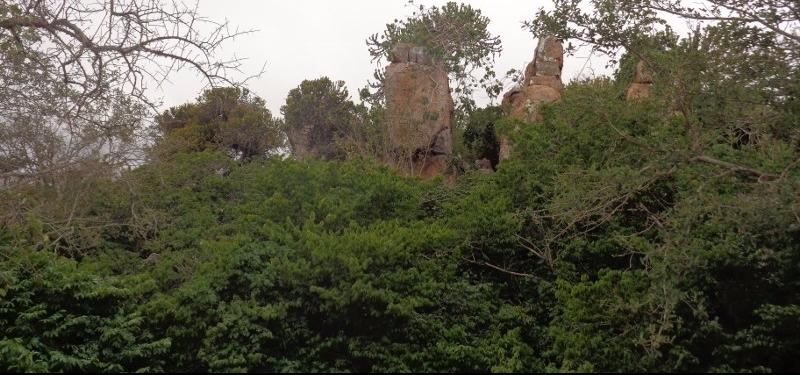 Mutomo Plant hill sanctuary Copyright Rupi Mangat