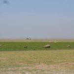 Elephant family in Amboseli Swamp Copyright Rupi Mangat