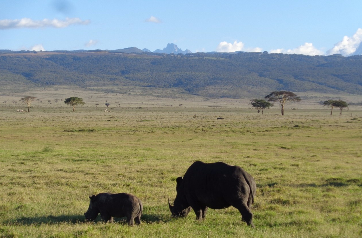 Southrern white rhino female and her calf at Lewa Conservancy with Mount Kenya as a backdrop Copyright Rupi Mangat