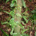 forest patterns Copyright Rupi Mangat