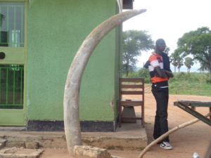 Murchison Falls National Park gate - note the elephant tusk - taller than the man. Copyright: Rupi Mangat