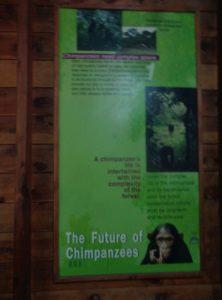 The chimpanzee sanctuary at Budongo Forest near Murchsion Falls. Copyright: Rupi Mangat