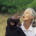 Dr Jane Goodall with Uruhara pant-hooting, 1996. Courtesy: GRASP - Great Apes Survival Partnership - www.un-grasp.org