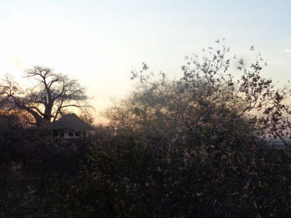Treetops Tarangire - copyright Rupi Mangat