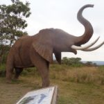 Free roaming elephants in Arusha National Park but this one is a model - copyright Rupi Mangat