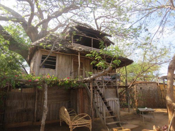 Tree house on the baobab tree at Diamonds Copyright Rupi Mangat
