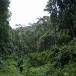 Taita Hills forest - of the Eastern Arc mountains in Kenya Copyright Luca Borghesio
