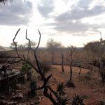 Luxury in the wilderness - Tarangire Treetops in Randilen WMA in Tanzania - an eco-lodge. Picture: Galib Mangat