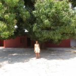 Livingstone's house in Kazeh - the courtyard with the mango tree from his time. Copyright Rupi Mangat