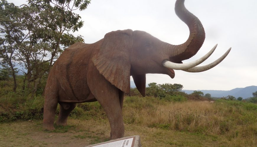Elephant at entrance of Lake Arusha Naional Park Copyright Rupi Mangat