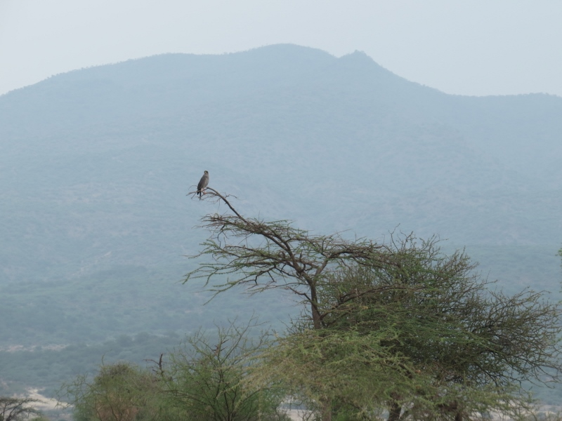 Birding with Olorgesailie the mountain in background - Copyright Rupi Mangat