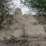 Termite mounds at Olorgesailie Copyright Rupi Mangat