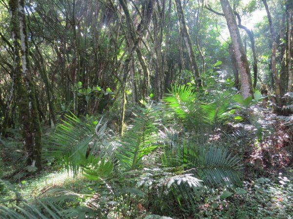 Natural forest in Taita Hills Copyright Rupi Mangat