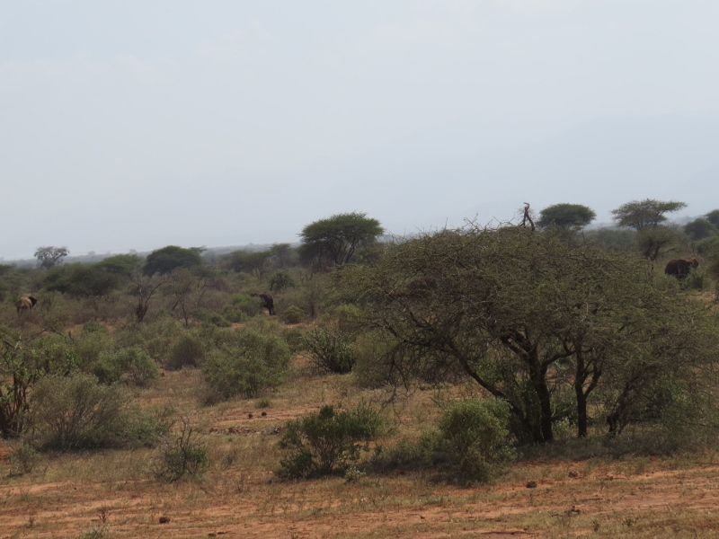 Historical route between Voi and Tsavo West during WW1 Copyright Rupi Mangat