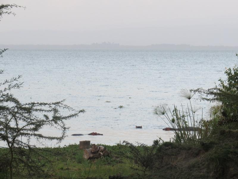 Hippos in Lake Naivasha in the dusk light Copyright Rupi Mangat