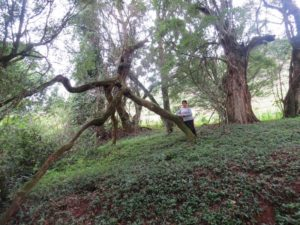 In the sacred forest 'fighi' on Vuria in Taita Hills - copyright Rupi Mangat