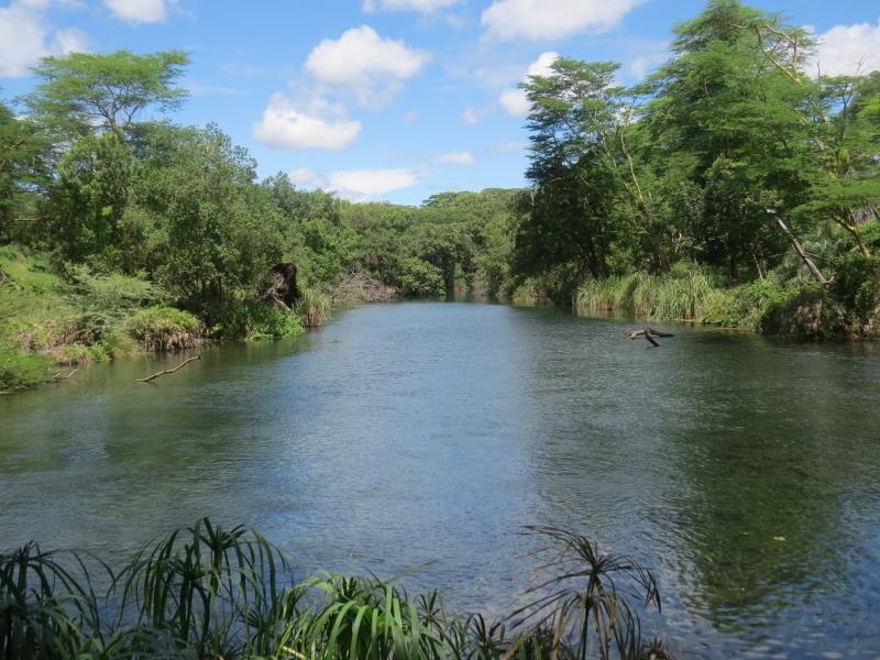 Crystal clear Mzima Springs in Tsavo West Copyright Rupi Mangat