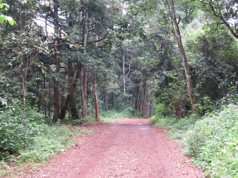Ngong Road Forest is a dry upland forest tipical of Nairobi.. Copyright Rupi Mangat