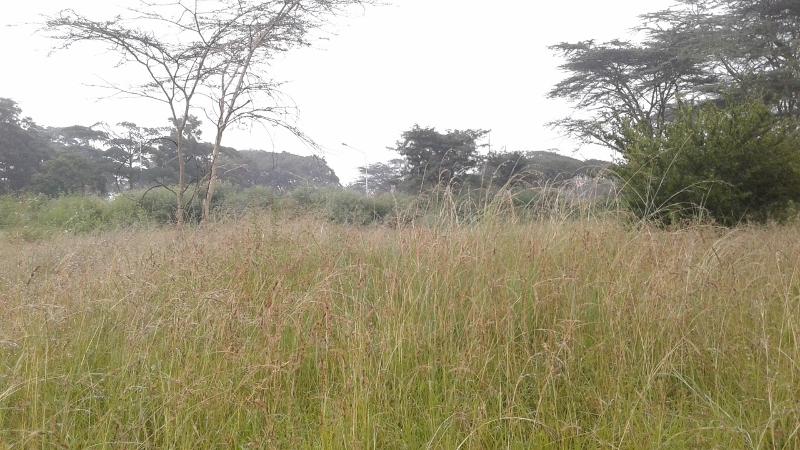 Uhuru Gardens grasslands (800x450)