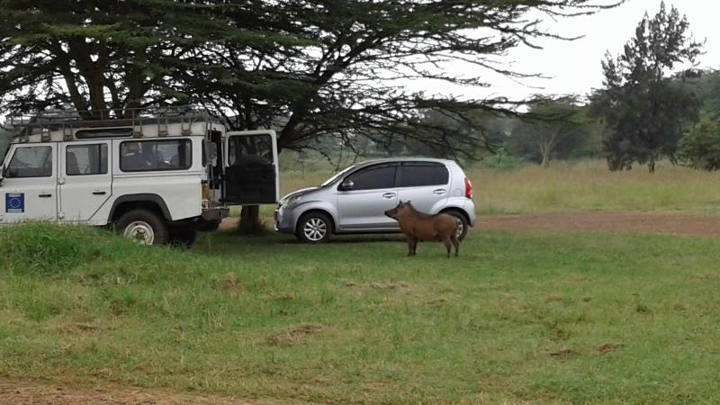 Uhuru Gardens warthog copyright Rupi Mangat (800x450)