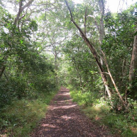 arabuko sokoke forest (800x800)
