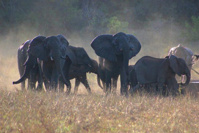 elephants jane spilsbury arabuko soke ofrest (800x533)