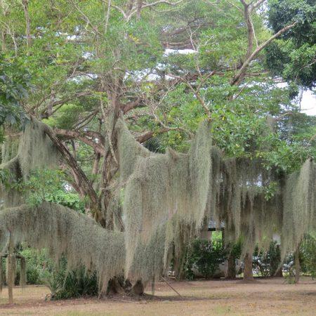 Hanging Gardens of Malindi - Copyright Rup Mangat