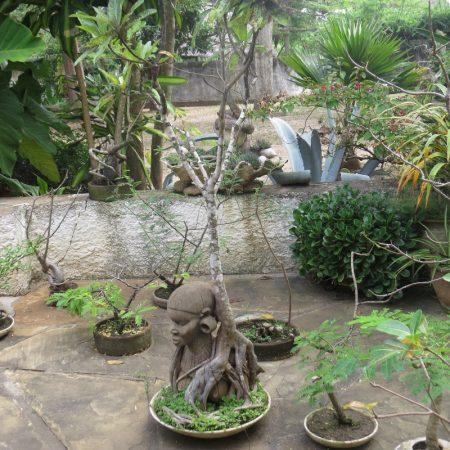Gigantic baobab as a bonsai - Copyright Rup Mangat