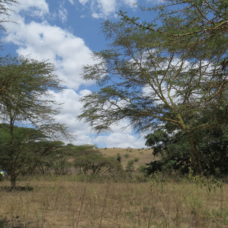 Naretunoi Conservancy, Kitengela overlooking Nairobi National Park Copyright Rupi Mangat