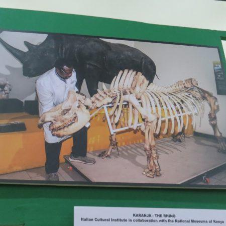 Karanja the black rhino - with the man who put him together, Dr Ogeto - copyright Rupi Mangat