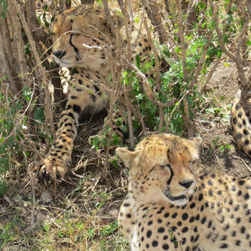 The Fast Five in Mara - copyright Rupi Mangat