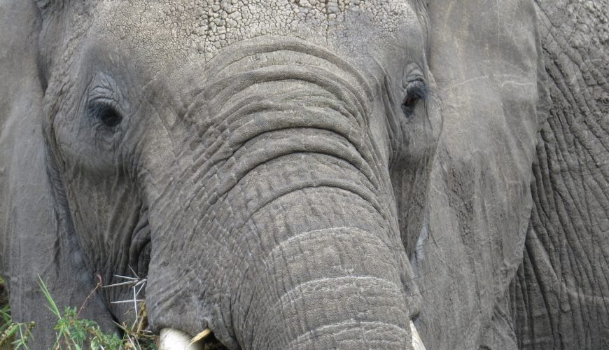 Female elephant in Talek River, Maasai Mara - Copyright Rupi Mangat