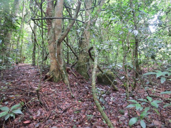 Ngangao forest floor. Copyright Rupi Mangat