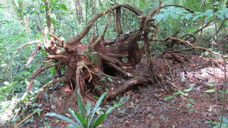 Ngangao forest in Taita Hills - copyright Rupi Mangat