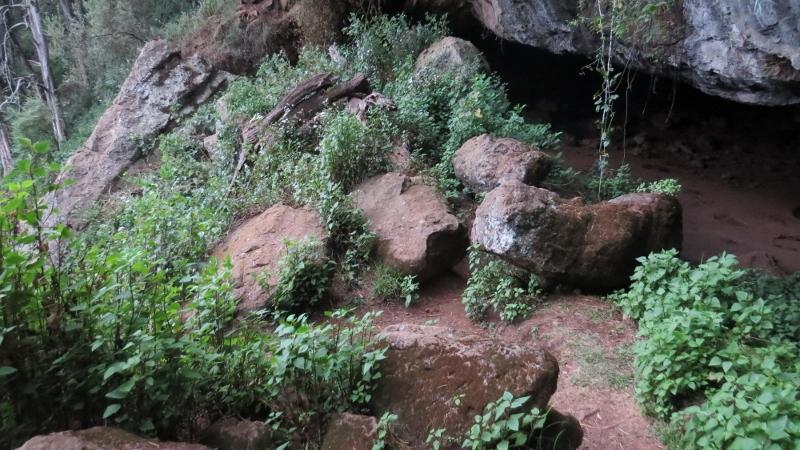 kitum cave visited by elephants on mount elgon copyright maya mangat dec 2018 (800x450)
