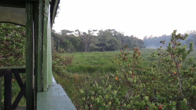 saiwa swamp from tree house copyright maya mangat (800x450)