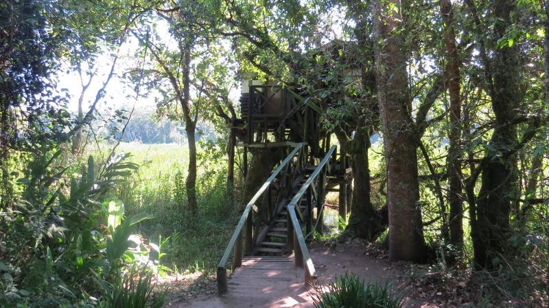 tree house entrance an saiwa swamp copyright maya mangat (800x450)